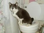 Cat-Toilet-e1332900331775