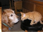 dog-and-cat-picture