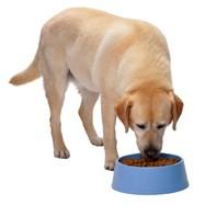 dog-eating-e1335551903326