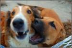 Dogs_by_catchsomestars-e1332902400387